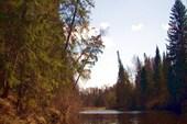 По берегам реки - настоящая тайга
