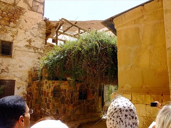 Монастырь Святой Екатерины. Неопалимая Купина