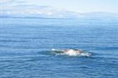 Купание в Баренцевом море ничем не отличается от купания в Черно