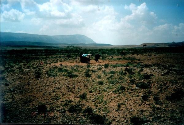 Послеобеденная молитва в пустыне