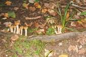 Первые грибы в этом походе